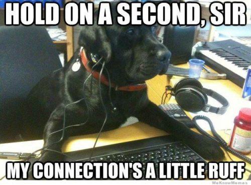Meme computer repair dog.