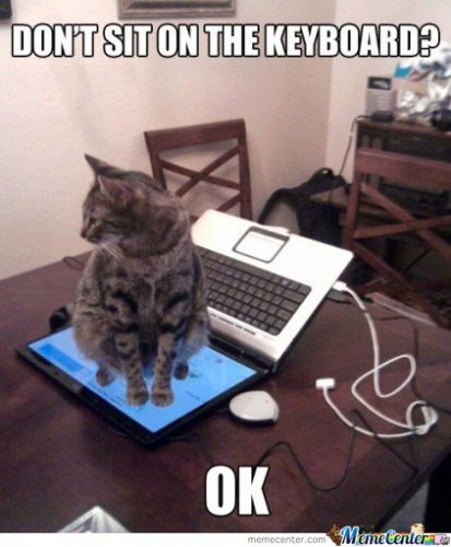 Computer cat meme Chrome OS.
