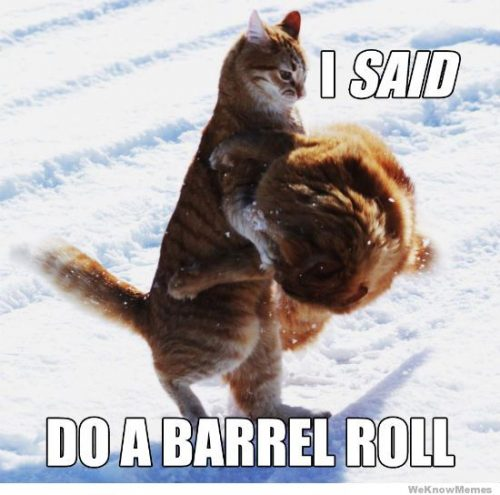 Do a barrel roll meme with cats.
