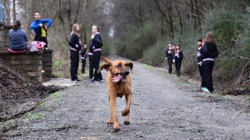 This dog crashed a running marathon. Guess what place she finished.