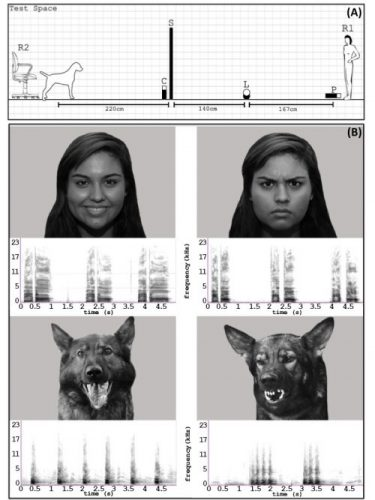 dogs-and-emotions-image