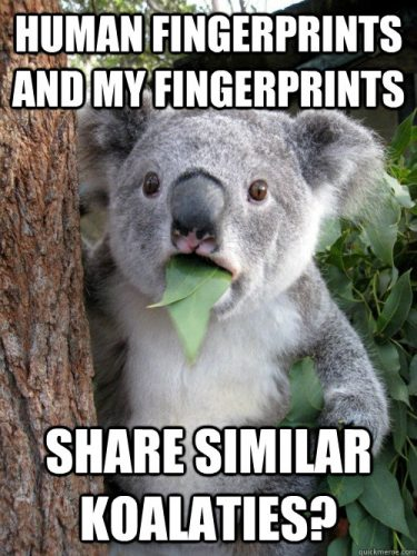 Fingerprint koala meme.
