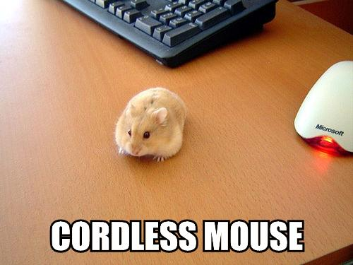 photo of mouse next to keyboard on meme saying cordless mouse