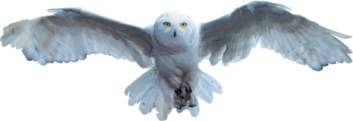 Hedwig from Harry Potter. (source)