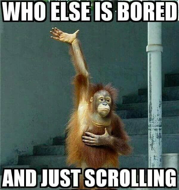 Bored monkey meme.
